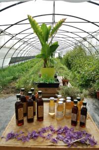 sirop de plantes bio